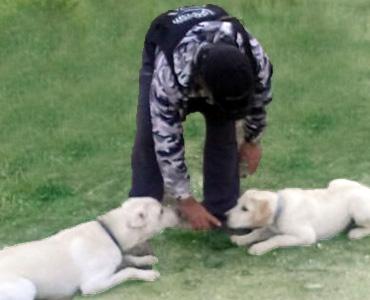 adiestramiento-cachorros-madrid
