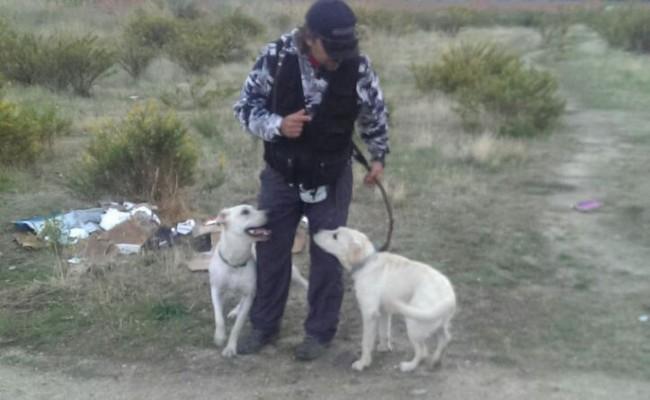 adiestramiento-canino-cachorros