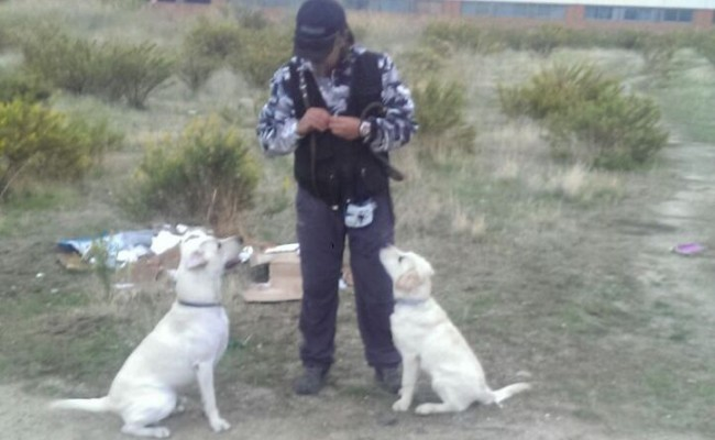 Como adiestrar un cachorro
