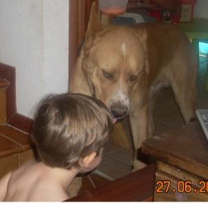 perros-ninos4