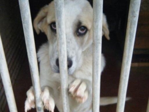 adopcion-perros-madrid