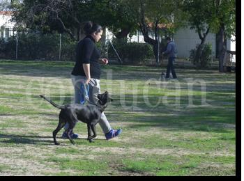 adiestramiento-canino-grupos-madrid