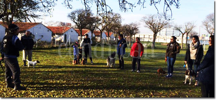 Clases grupales adiestramiento canino Madrid