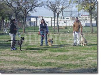 clases-grupales-adiestramiento-perros-madrid