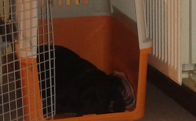 ansiedad-separacion-cachorro