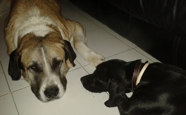 trastorno-conducta-canina