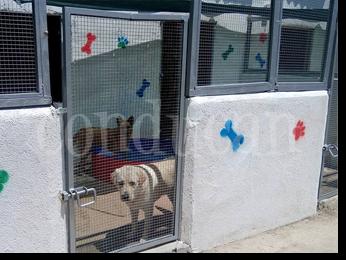 residencia-canina-madrid