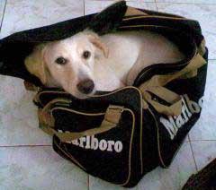 perro-bolso