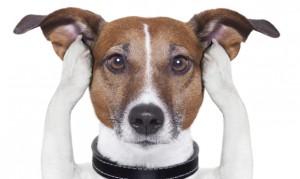 Desensibilización sistemática en perros