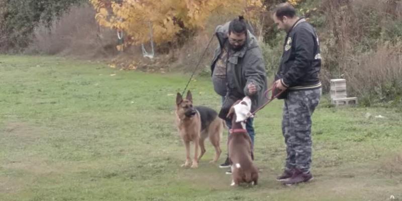 sociabilizacion-perros